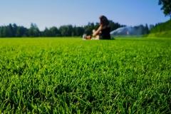 Tauko nurmikkopellolla